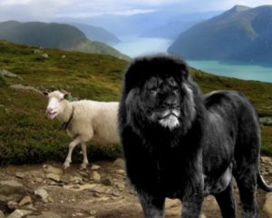 black_lion_in_norway____by_creatureofmagick-d58nkgg