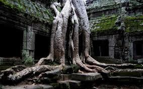 Medicine Buddha...The Trees