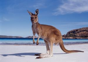 Hey! How did I get on the Beach? Thank you Australia...♥